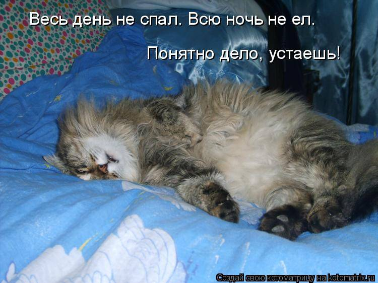 Почему кошка не спит ночью почему кошка не спит ночью