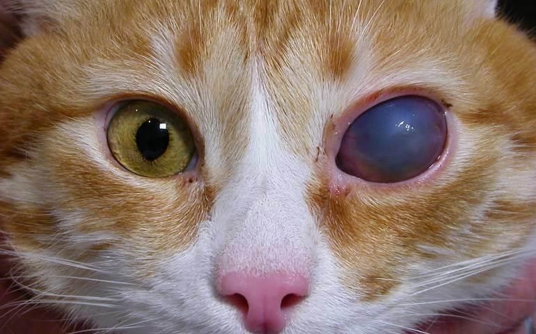 Когда котенок начинает видеть после появления на свет?