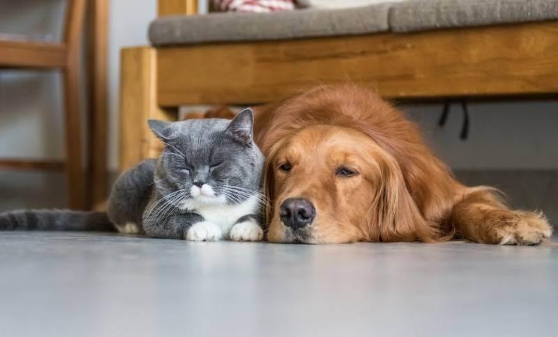 Какие породы собак хорошо уживаются с кошками