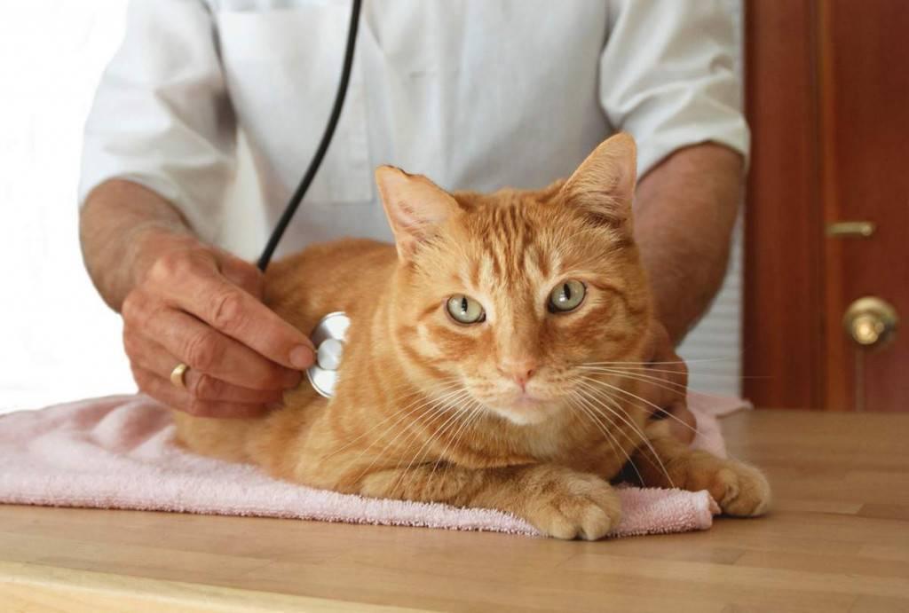 Чем запрещено кормить кастрированных котов