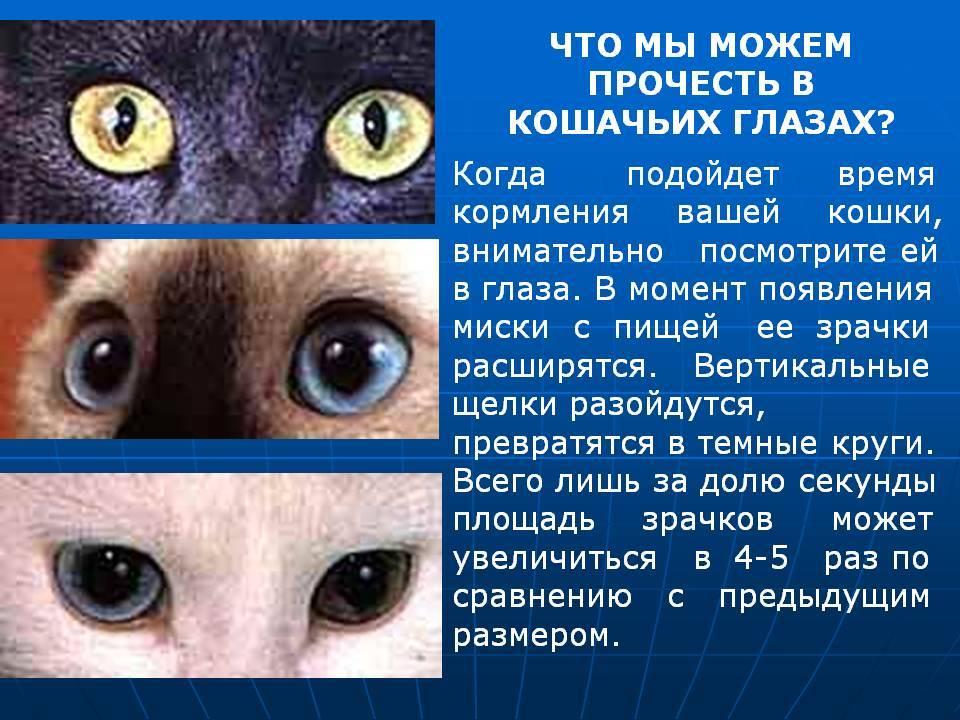 О глазках новорождённых котят