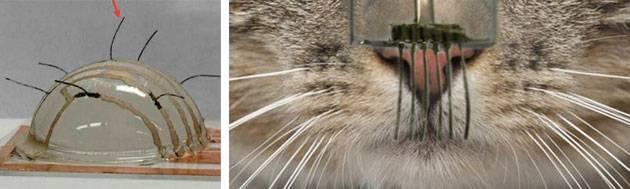 Почему у котов и кошек выпадают и ломаются усы: что делать