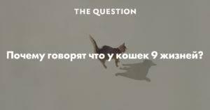 9 жизни кошек - почему так и правда ли это? кликай-узнаешь!