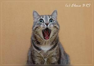 Трусливая кошка