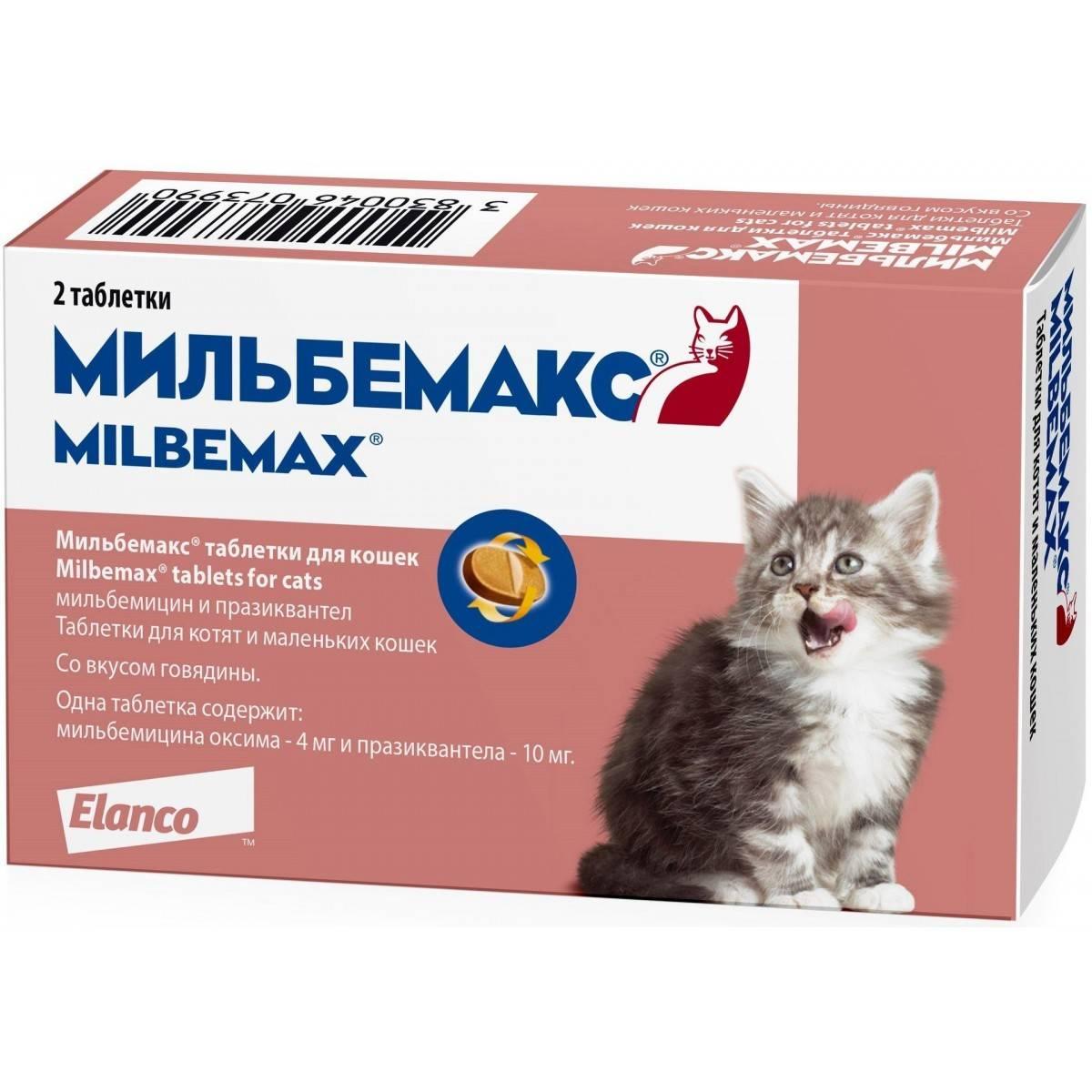 Инструкция по применению таблеток от глистов «мильбемакс» для лечения кошек и котят: состав и дозировка, схема приема