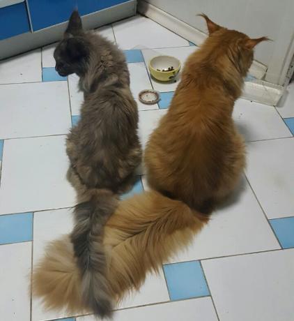 Признаки беременной кошки и уход за животным