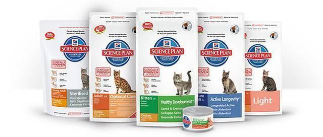 Какой выбрать самый лучший корм для кошек: мнение ветеринаров