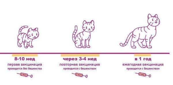 Календарь прививок для котят и кошек