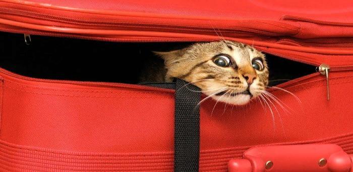 Как перевезти кота на самолёте: опыт бывалых