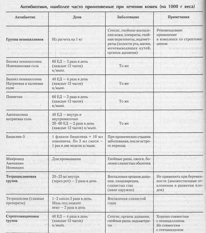 Какие антибиотики можно давать кошкам, список препаратов, дозировка