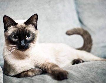 Как назвать полосатую кошку девочку