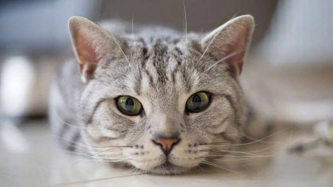 Дрожание кошки. кот дрожит — полный список причин от ветеринара. активный сон котенка – не повод для волнения