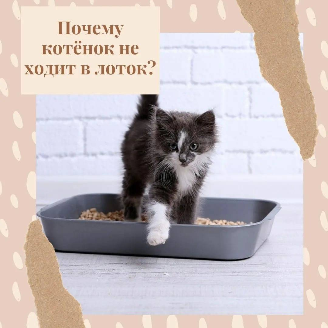 Кошка перестала ходить в лоток, описание причин и решения проблемы
