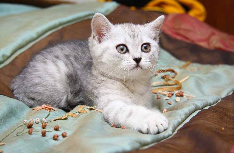 Как можно красиво назвать домашнюю кошку-девочку?
