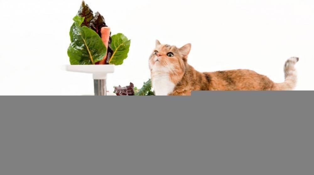 Как правильно кормить кошек, котов и котят кормами и другой едой