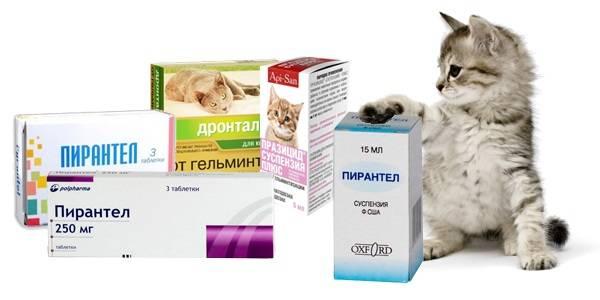 Смекта для кошек и котят при поносе: дозировка, как давать