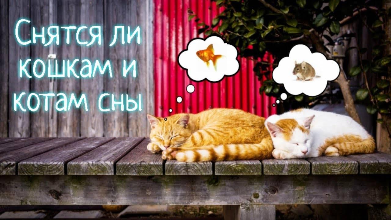 Сонник часто снятся кошки. к чему снится часто снятся кошки видеть во сне - сонник дома солнца