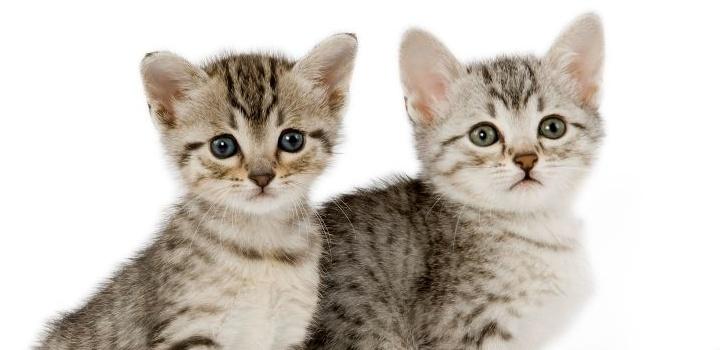 Купание котенка в первый раз: с какого возраста можно купать котят? как правильно искупать котенка дома впервые?