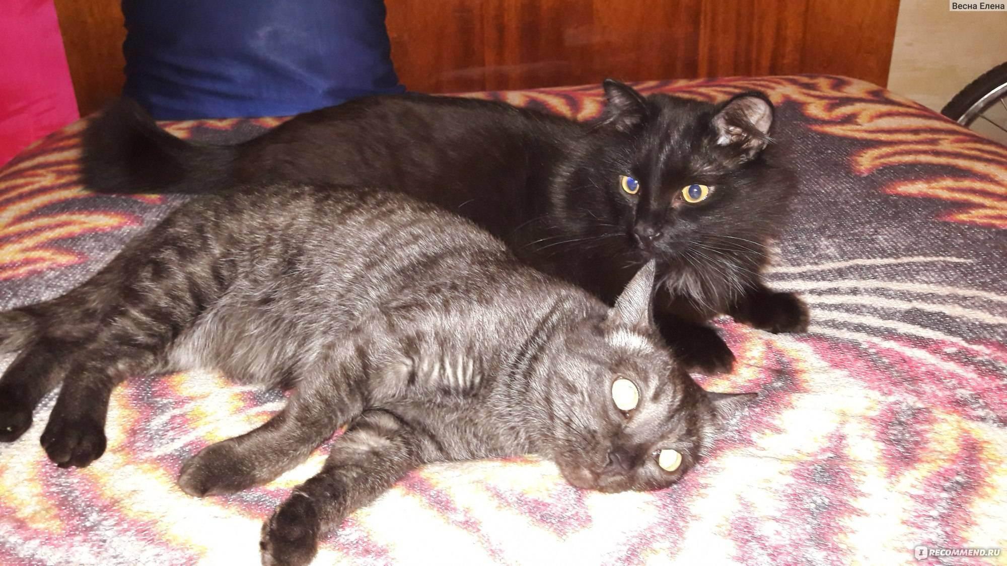 Классификация промышленных кормов для кошек