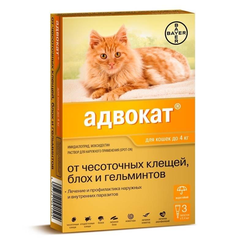 Капли адвокат для кошек: показания и инструкция по применению, отзывы, цена