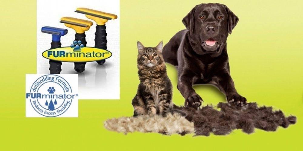 Фурминатор для кошек (50 фото): щетка для британских и шотландских, как работает чесалка, чем можно заменять furminator