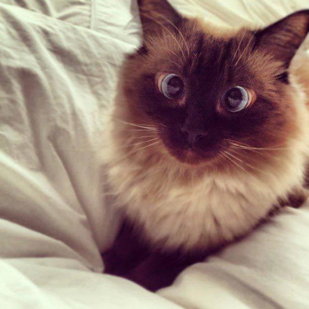Что делать, если у кошек косоглазие