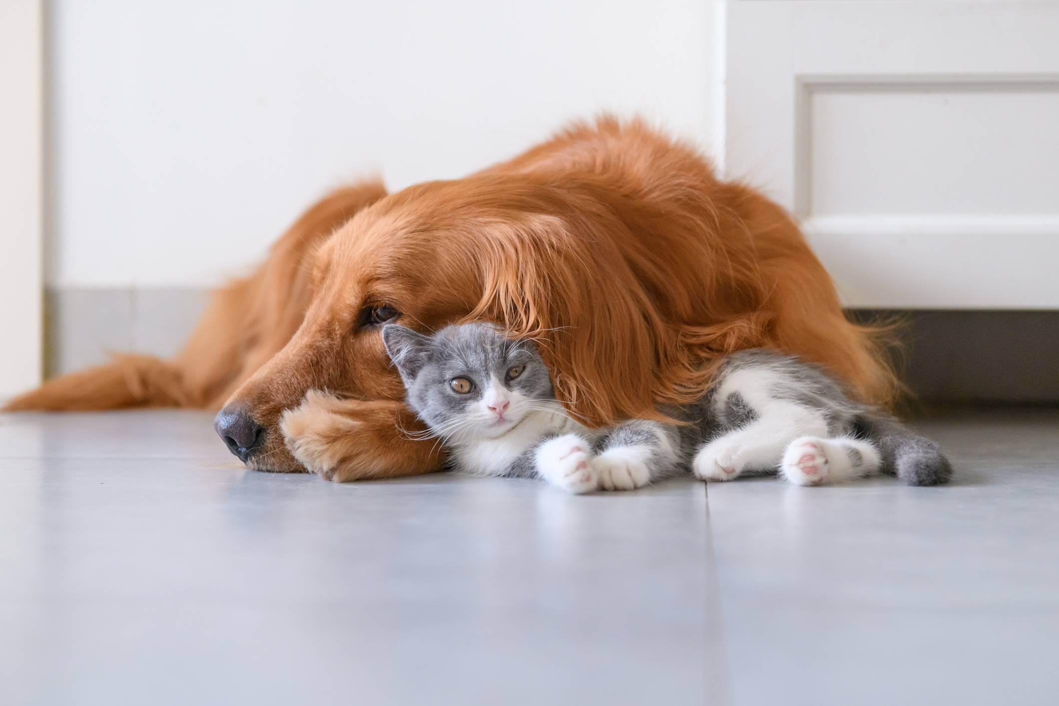 9 бесплатных приложений, которые сделают проще жизнь собачника