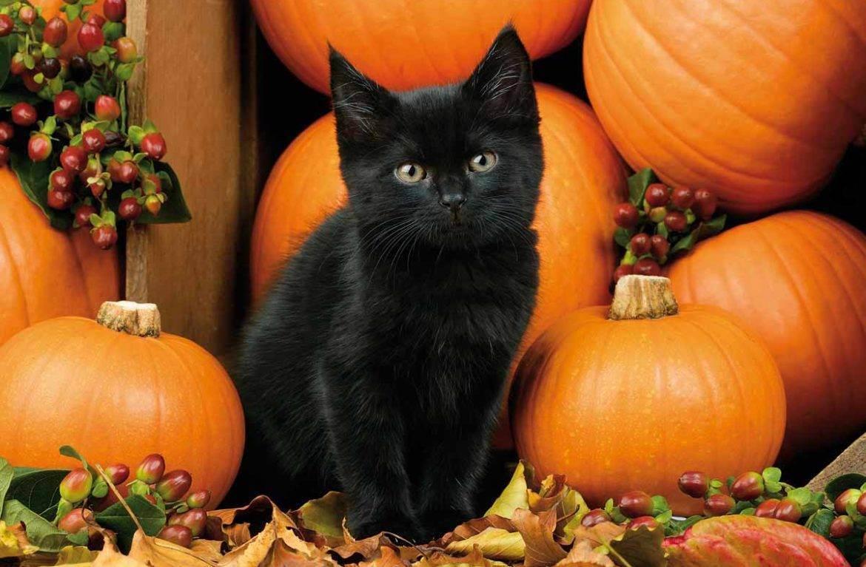 Почему кошки любят оливки и маслины?