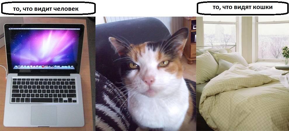 Могут ли кошки видеть души умерших: мистические и естественные причины странного поведения питомцев