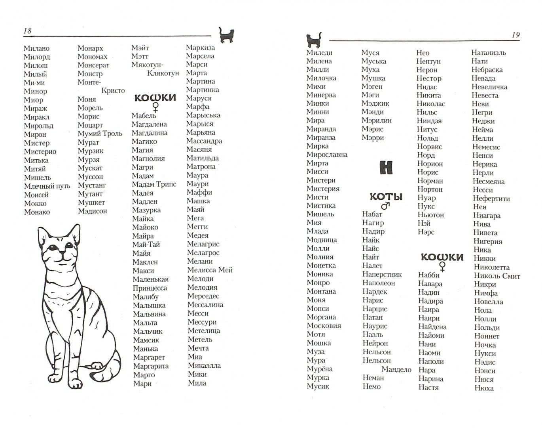 Японские имена для кошек: какими японскими именами называют котят-мальчиков и девочек в россии? как выбрать кошачьи клички со смыслом?