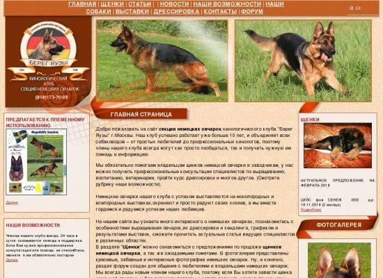 Критерии выбора и особенности ухода за щенком немецкой овчарки