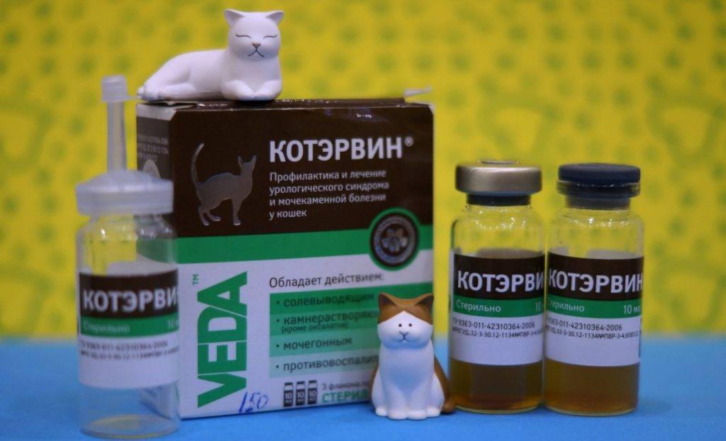 Капли котэрвин для котов: состав, инструкция по применению, отзывы