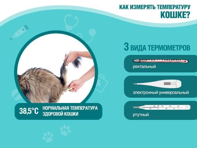 Как понять, что у кошки температура: определяем с градусником и без