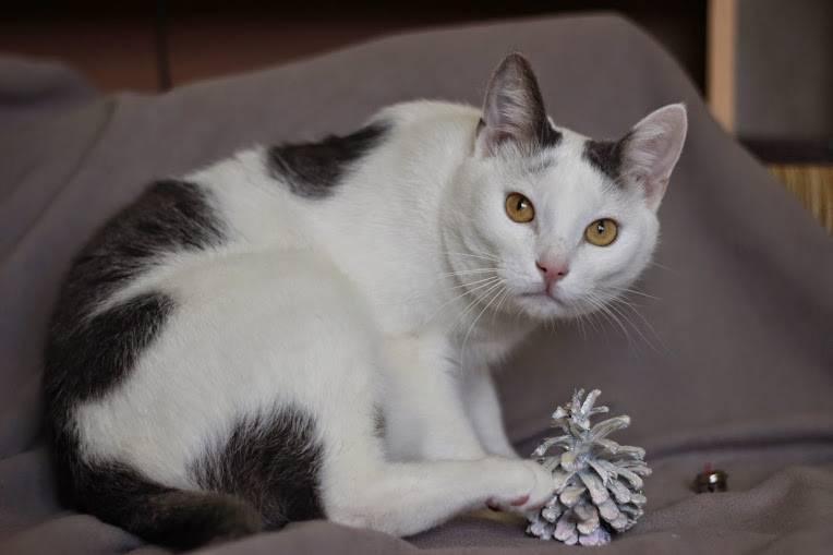 Все об окрасах кошек: названия, генетика, таблицы