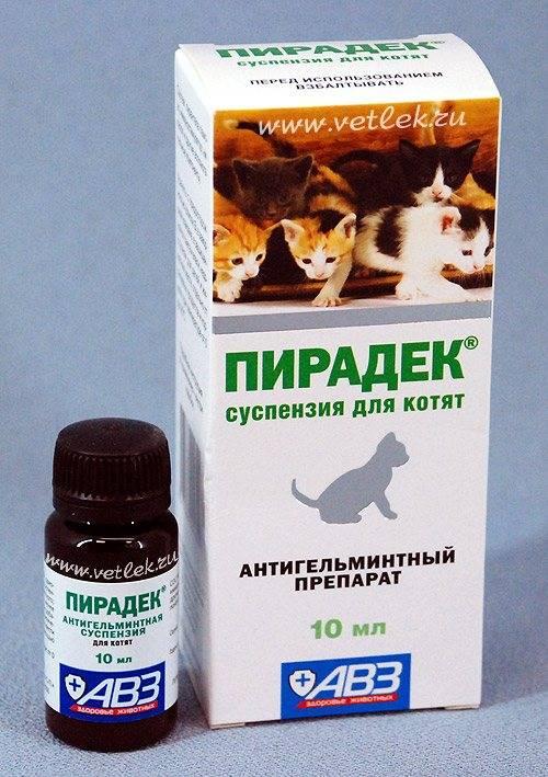 Чем глистогонить котенка