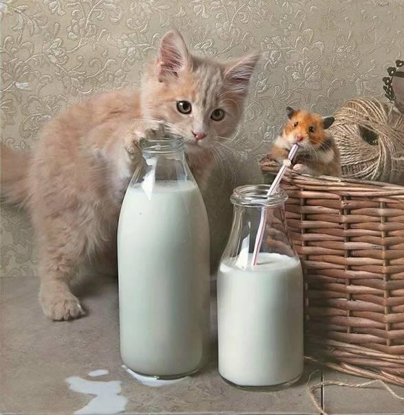 Котёнок не пьёт воду: чем это опасно