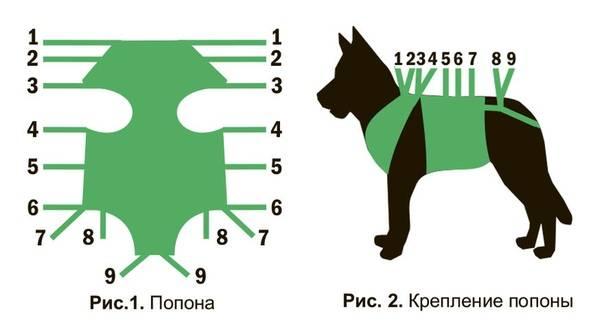 Попона для кошки — не дань моде, а нужный и практичный аксессуар