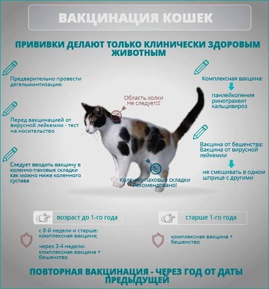 Кот не ест и не пьёт: тревожные симптомы, которые должны насторожить