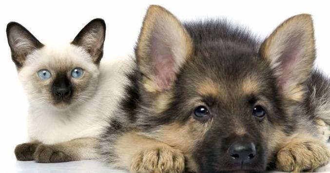 Кто лучше: собака или кошка