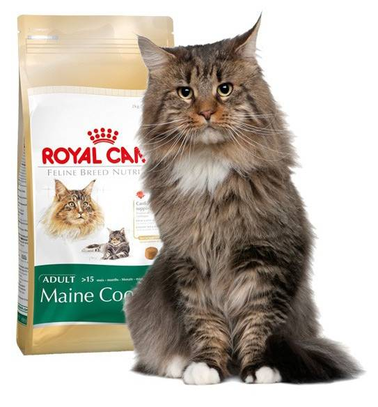 Корм для мейн-кунов: каким лучше кормить котят? рейтинг сухих кормов премиум-класса. какой больше подходит для кастрированных кошек? как выбрать влажный корм?