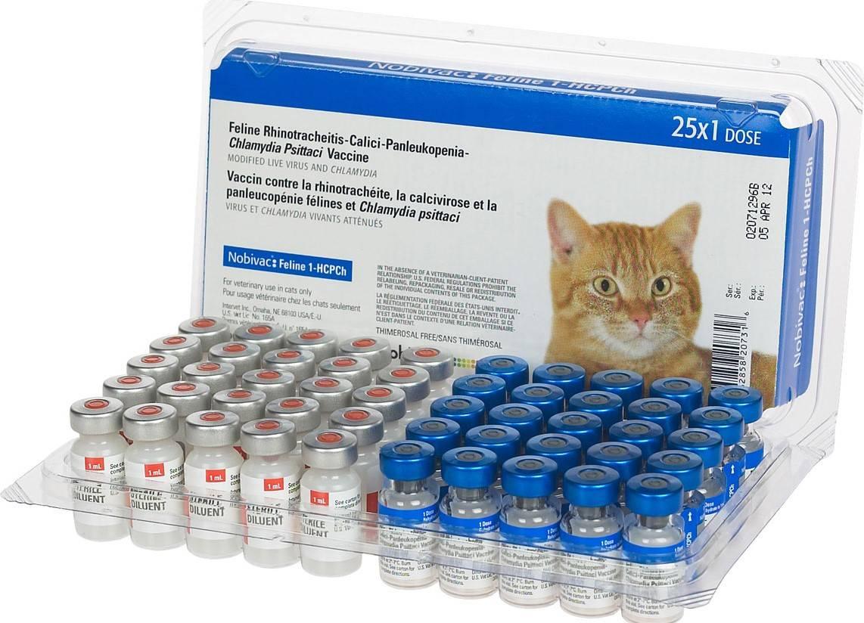 Основные симптомы чумки у кошек. вакцинация - твой питомец