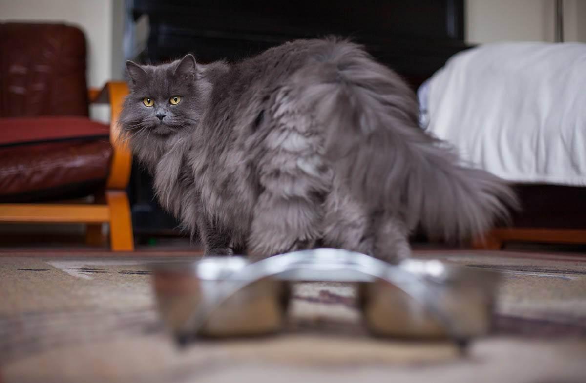 Не подходит корм? - запись пользователя ксения (ksenijamalikova) в сообществе домашние животные в категории кошки. болезни, прививки, советы по уходу - babyblog.ru