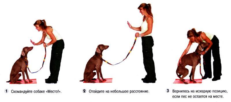 Как дрессировать собаку в домашних условиях: рассматриваем вместе