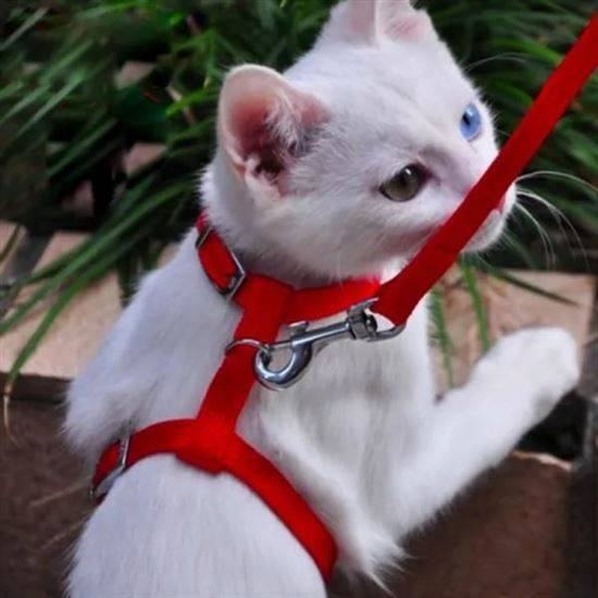 Шлейка для кошки — виды, тонкости выбора и правила приучения