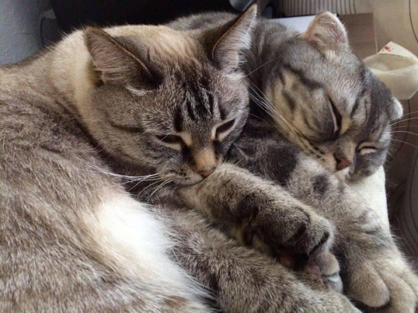 Что делать, если у кошки после прививки появилась шишка на месте укола или рядом? когда опухоль переходит в онкологию?