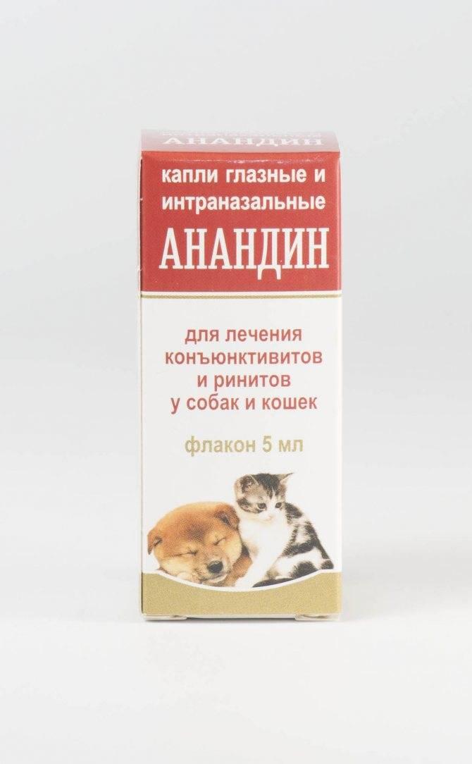 Простуда у кошек и котов: симптомы, лечение, профилактика