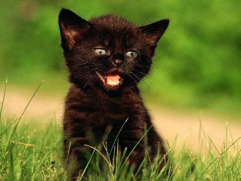 Клички для котов коричневого цвета