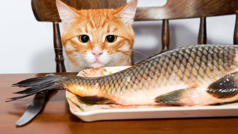 Можно ли кошкам рыбу: разрешенные виды, как кормить