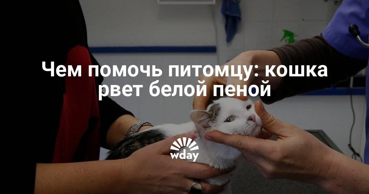 Кошку вырвало желчью: причины рвоты, способы оказания первой помощи, меры профилактики