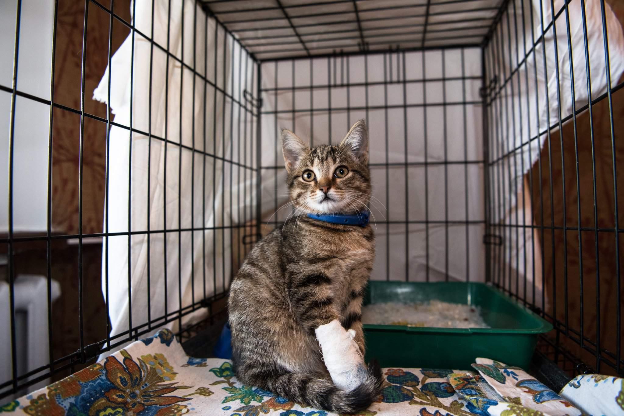 Адаптация кошки в новом доме: как помочь